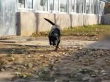 京广桥家庭宠物寄养 单独房间寄养 散养托管接送宠物