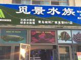 青岛觅景水族