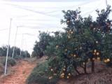 高密度抗晒防老化果木防虫网脐橙种植专用工厂直销