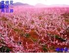 2018平谷桃花节 周边自选景区 一日两日游