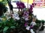 室内室外花木出售,假山奇石。
