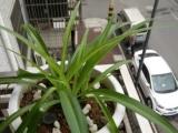 大小十盆花草,五十元,喜欢拉走,换个花盆钱