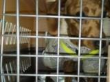 寵物托運發往全國一對一服務專人照顧