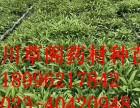 重庆长寿区富屯药材种植合作社面向陕西诚招合作户合作共赢