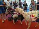 2018上海羊驼出租展览展示庆典暖场