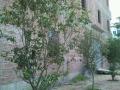 太平镇,太平中学 厂房,仓库 145平米
