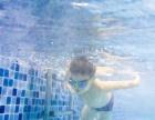 大连婴儿潜水_贝贝鲸婴儿游泳潜泳