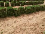 长沙马尼拉草皮 宁乡草坪 长沙哪里有草皮