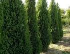 昌平园林绿化 假山水系 防腐木