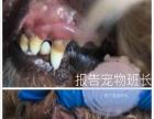 东胜区最专业、干净的宠物生活馆报告宠物班长