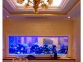 南京鱼缸定做大型水族工程观赏大型酒店鱼缸定做