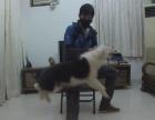 上门手把手教你训练狗,及时纠正坏习惯,无效退款!