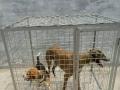 长期出售各种尺寸狗笼,加工订做,耐用