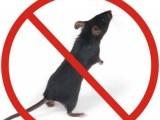 办公室灭鼠厂家直供一件起批