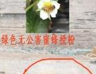 (莱阳市)**不打药草莓,支持任何检验