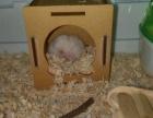 一只可爱的仓鼠宝宝
