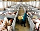 东营市广饶养猪厂房 2000平米