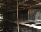 蓝田土地养殖核桃园低价出租------红铺网