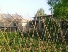 大棚地出售 独门独院 可干养殖 种菜果树都有