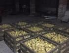 养殖养鸡养鸭养鹅 长期批发出售优质种苗