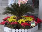 绿植租赁 花卉租摆 景观绿化养护 鲜花花园