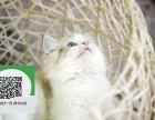 天津在哪里卖健康纯种宠物猫 天津哪里出售布偶猫