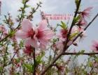 春季踏青 上海十大农家乐 赏菜花 采摘 住宿 钓鱼 卡丁车