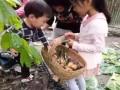 带着孩子走进民风淳朴宁静优美的强兴农趣园
