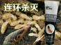 专业灭德国小蟑螂 灭老鼠 灭蚂蚁防治白蚁