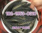 广东杂交黑鱼苗养殖基地, 杂交生鱼苗批发价格