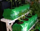 云邦阳台蔬菜种植宝加盟
