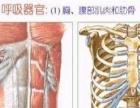 东方脊柱护理中心 脊柱护理这个很重要