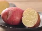 供应 有机蔬菜高山洋芋红皮黄心马铃薯