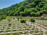 十三陵凤凰岭附近的墓地