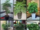 办公室绿植盆栽租摆园艺绿化养护花卉景观批发
