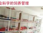 北京最大猫舍 直销加菲 蓝猫 虎斑猫 包健康纯种
