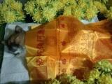 贵阳家庭宠物殡葬正规宠物殡葬公司