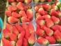 无公害草莓采摘