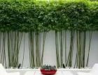 佛山南海高明三水顺德厂区绿化专业养护,绿化改造种植
