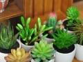 鲜花批发、 生日花束开业花篮 、出售绿植,同城服务
