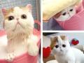 杭州一定范围内上门宠物犬狗美容含洗澡 ,上门洗猫(需要预约)
