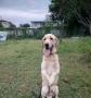 有缘犬舍,为您提供爱犬寄养,训练等业务。