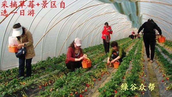 2018植树踏郊游去哪里 大峡谷玻璃栈道 采摘草莓特价一日