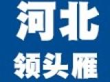 河北领头雁减龄学生款女士上衣短袖T恤网红爆款批发零售