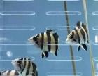 鱼友的福利来咯,批发观赏鱼