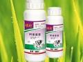 水稻稻纵卷叶螟防治,稻纵卷叶螟用什么药,水稻钻心虫用什么药