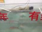 出售鱼缸一个