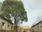 庐江县石头镇 厂房 800平米