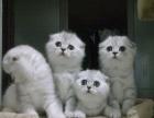 重庆CAT KING宠物级猫,价格低廉,常批发猫店
