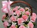 【天水鲜花店】同城配送鲜花,7年花店,秦州麦积送花